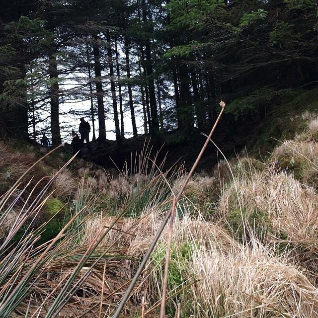 woods_recce2